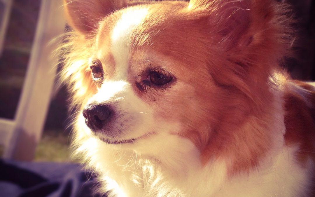 Fästingmedel till hund
